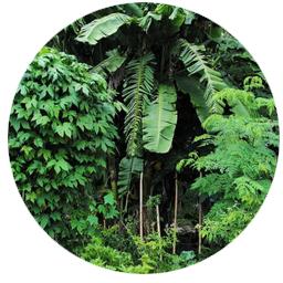 Orlando Permaculture
